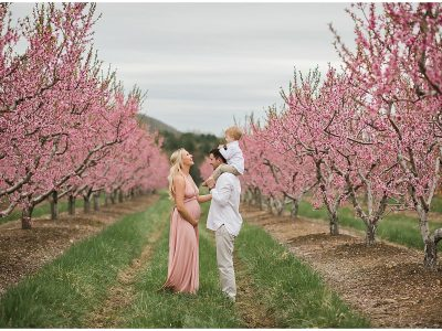 Cloudy Peach Orchard Maternity Session